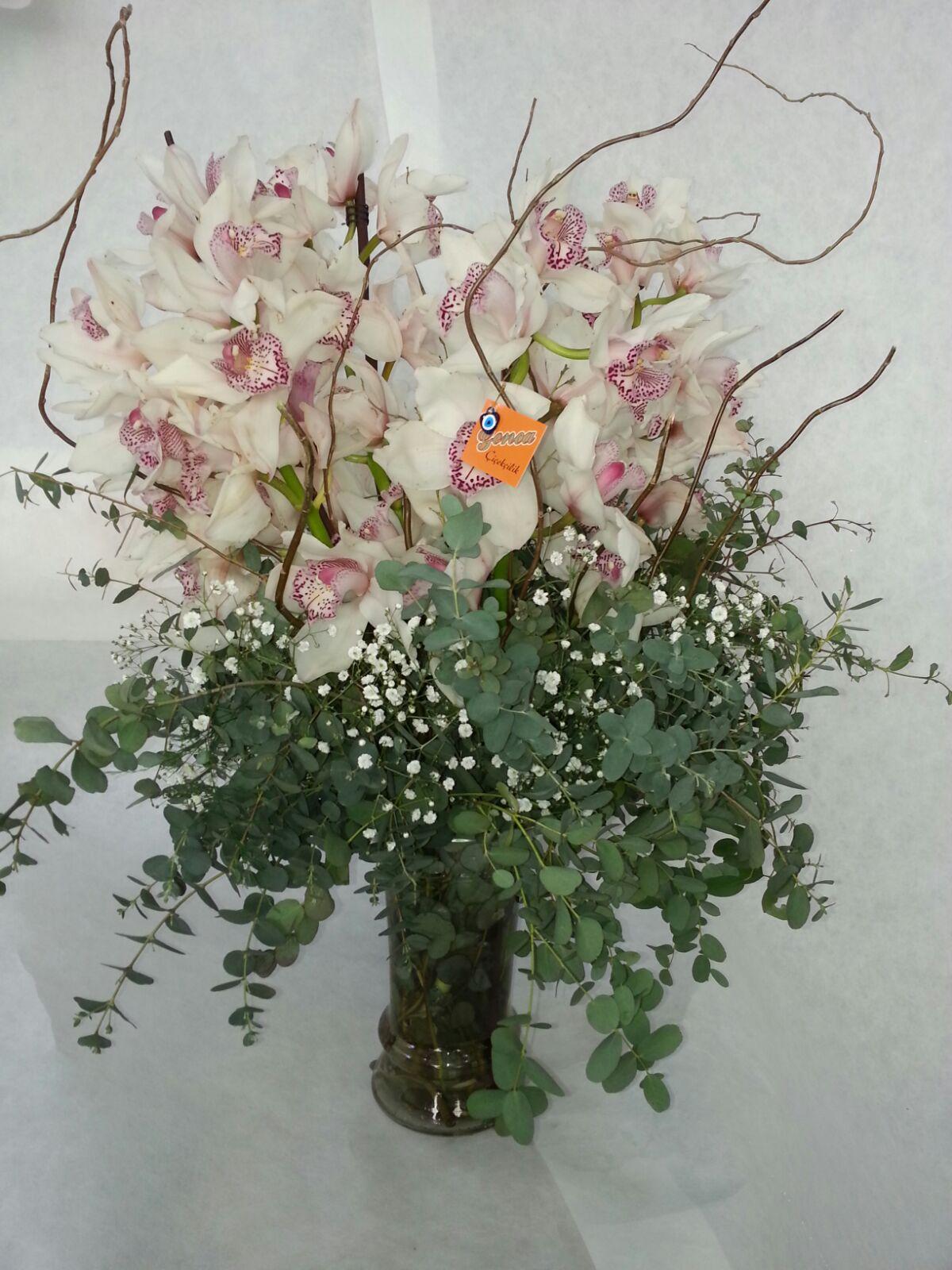 Orkide Tanzimler