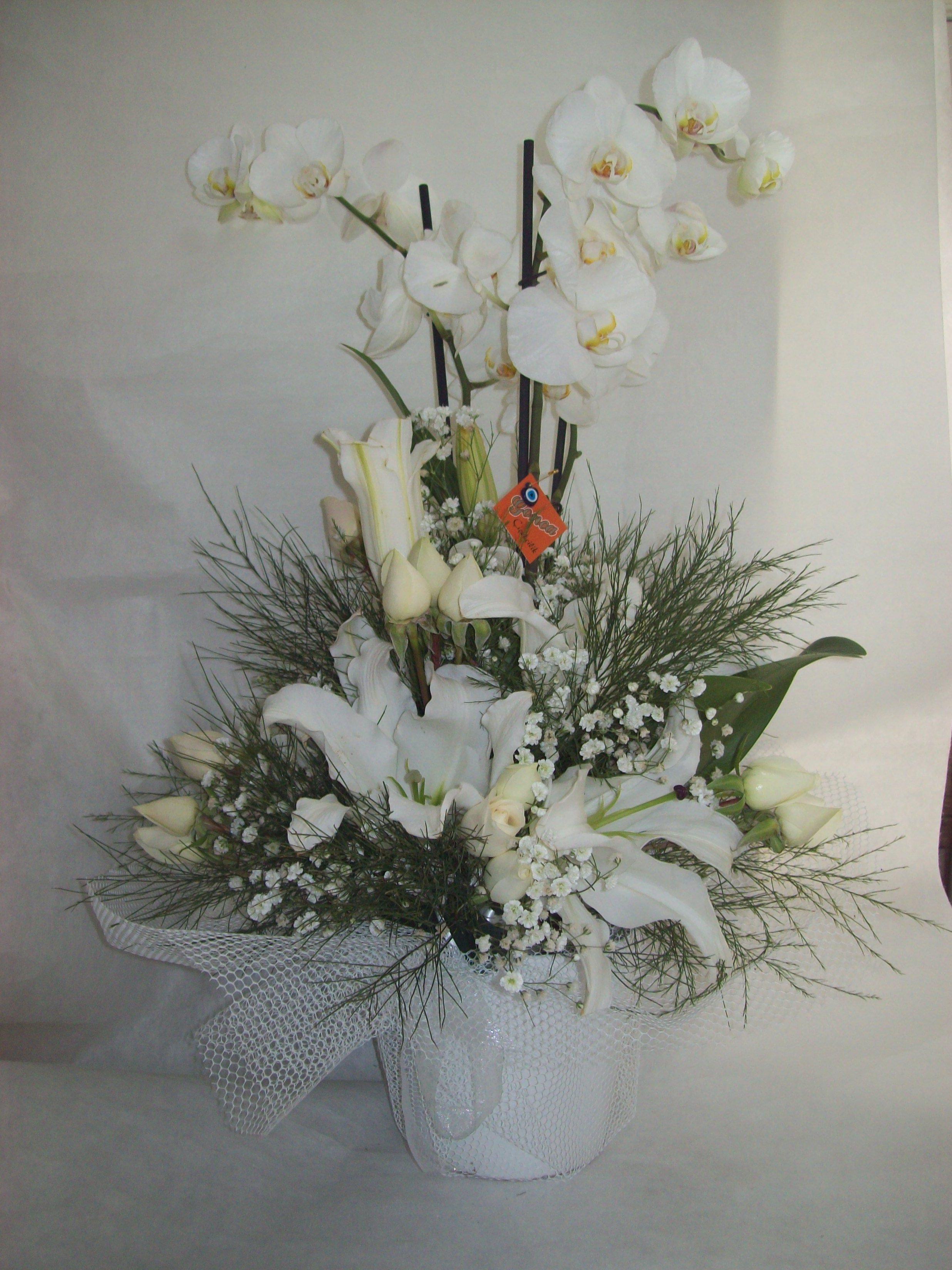 Çift Dal Orkide Tanzimi