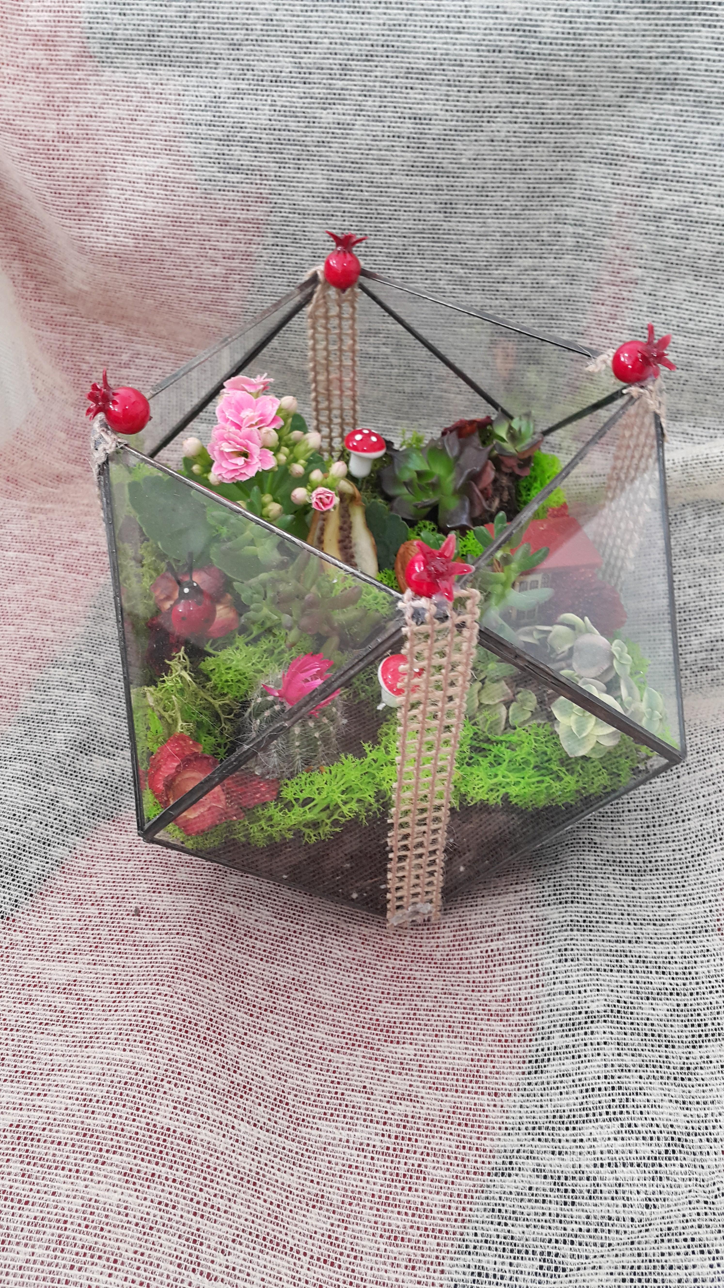 El yapımı Geometrik Cam Terrarium